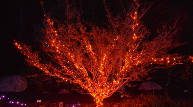 Botanical Garden Light Show